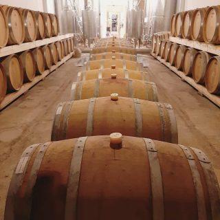 Il legno ha sempre il suo fascino... in ciò che è e in ciò che racchiude 🍷  #luanabottacin #ionelcalice #sommelier #progetti #collaborazioni #consulenza #lavoro #lovemyjob #vino #vini #wine #italianwine #tasting #cantina #barrique #barriques #botti #barricaia #principidiporcia
